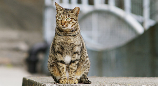 Image result for le chat